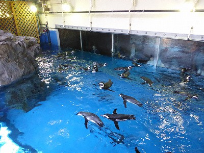須磨海浜水族園ペンギン館