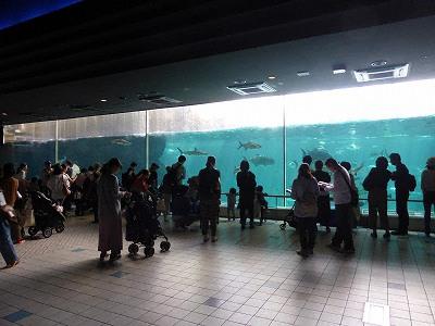 須磨海浜水族園本館の大水槽