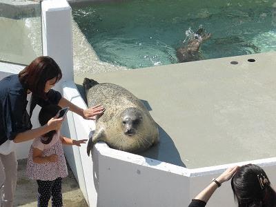 須磨海浜水族園アザラシにタッチ