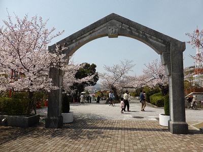 水の科学博物館の桜