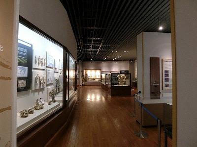 京都大学総合博物館自然史展示室