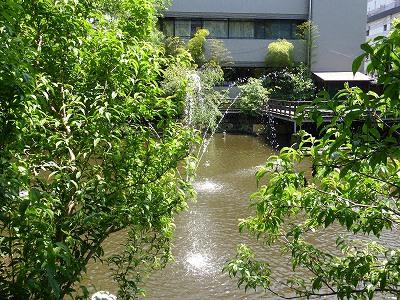 生田神社の生田池