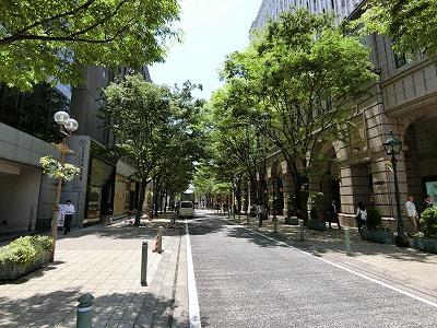 神戸旧居留地の明石町筋(大丸神戸店東側)の並木道