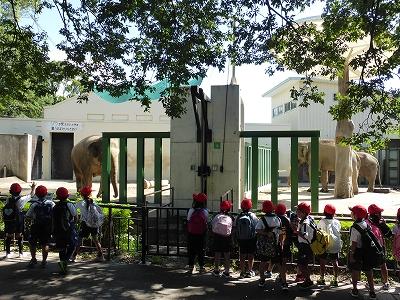 王子動物園のアジアゾウとアフリカゾウ
