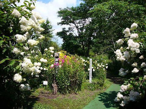 軽井沢町植物園の写真